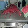 Alimentador mesas selección Biofrut